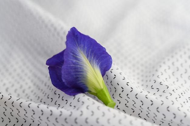 Blaue schmetterlingserbsenblumen auf weißem stoff.