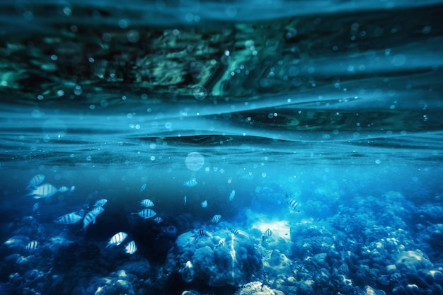 Blaue wellen unter wasser im tropischen meer mit fischen am korallenriff