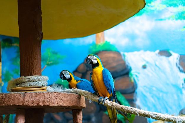 Blauer gelber papageienaras, der auf zweig sitzt.