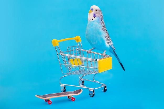 Blauer gewellter papagei auf mini-einkaufswagen