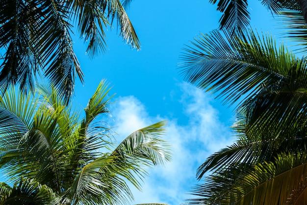 Blauer himmel mit ein paar wolken und palmen