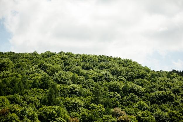 Blauer himmel mit wolken über den bäumen im grünen wald