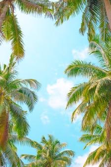 Blauer himmel umrahmt von palmblättern