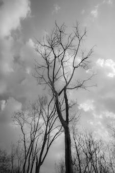 Blauer himmel und wolken des toten stehenden baumhintergrunds.