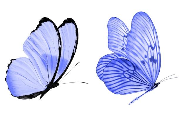 Blauer schmetterling. natürliches insekt. isoliert auf weißem hintergrund