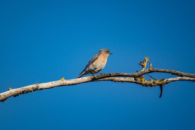 Blauer und grauer vogel auf braunem ast während des tages