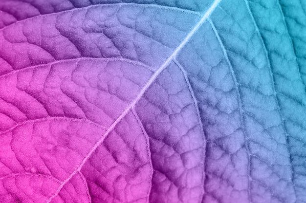 Blauer und rosafarbener blatthintergrund