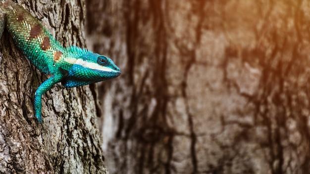 Blaues chamäleon im tropischen bereich auf dem baum