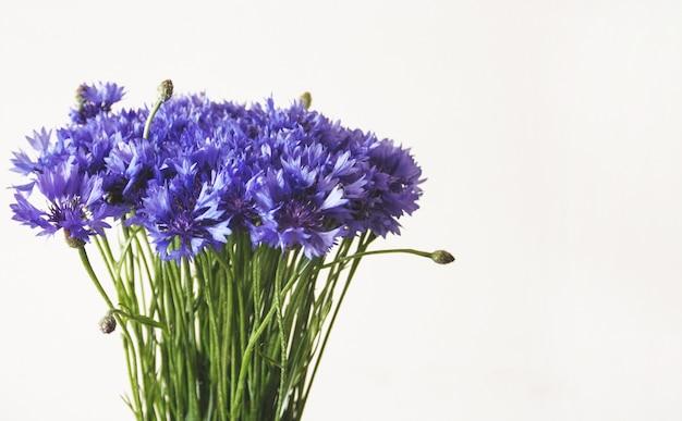 Blaues kornblumenbündel auf weißem hintergrund
