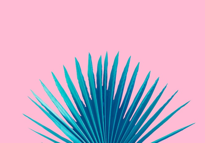 Blaues palmblatt auf einem rosa hintergrund