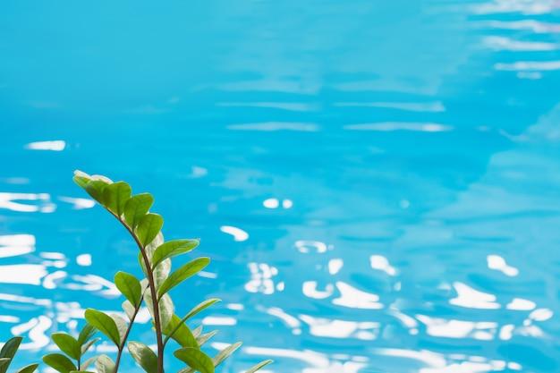 Blaues poolwasser mit sonnenreflexionen und grünen tropischen blättern in der front.