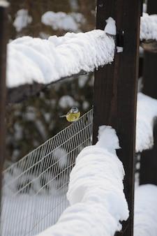 Blaumeise saß auf einem schneebedeckten zaun