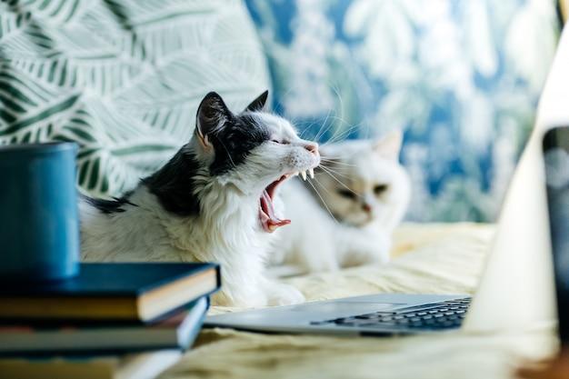 Bleib zu hause, bleib sicher. katze am computer während der quarantäne und selbstisolierung während der coronavirus-epidemie.