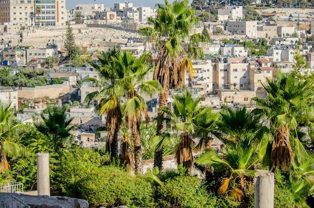 Blick auf arabische häuser in ostjerusalem durch die palmen des davidson centers