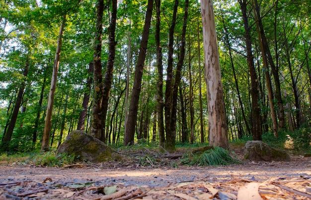 Blick auf bäume