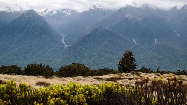 Blick auf berge, die von dichten wäldern bedeckt sind, trockene büschel im vordergrund kepler track neuseeland