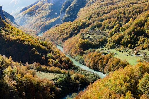 Blick auf bergfluss tara und wald in montenegro