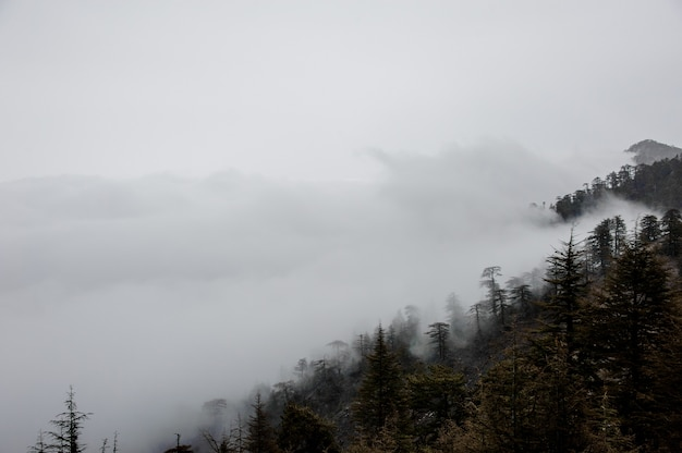 Blick auf berghänge im nebel