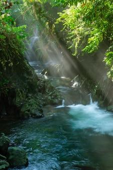 Blick auf das flusswasser am morgen mit sonnenschein und grünen blättern im indonesischen tropenwald asien