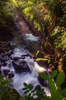 Blick auf das flusswasser am morgen mit sonnenschein und grünen blättern im indonesischen tropenwald