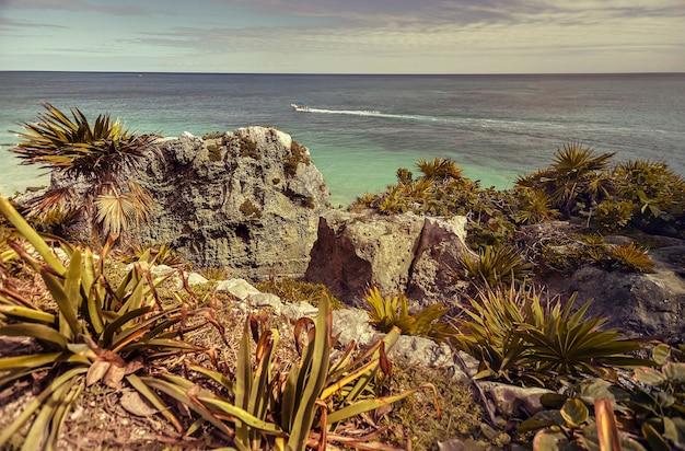 Blick auf das karibische meer, das von aloe-pflanzen gefiltert wird, von der höhe der ruinen von tulum in mexiko