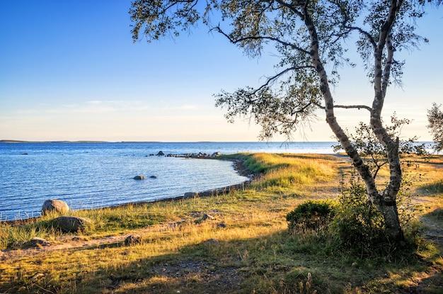 Blick auf das weiße meer auf den solovetsky-inseln, das kap der labyrinthe und den gewundenen stamm