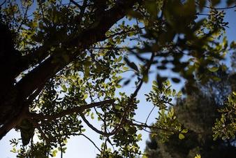 Blick auf den blauen Himmel durch die Äste eines Baumes.