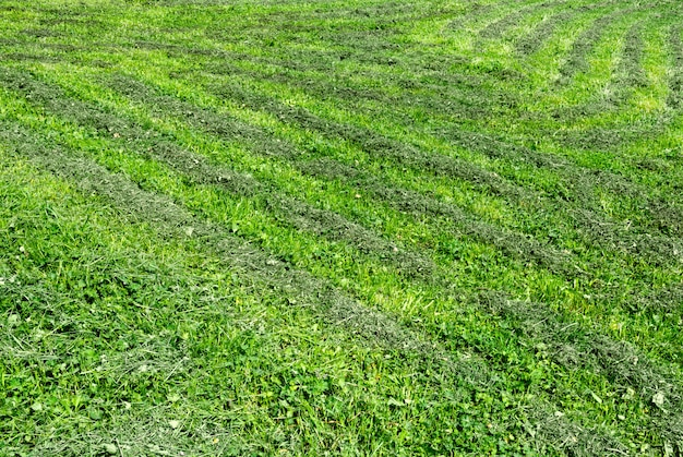 Blick auf den gemähten rasen, auf dem das gras geschnitten wird.