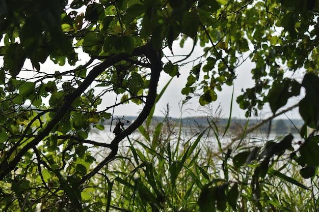 Blick auf den großen herbstlichen waldsee