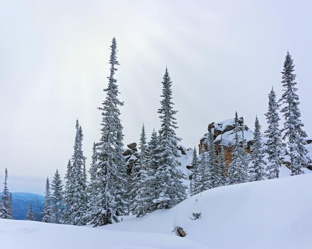 Blick auf den mount utuya. winterwaldlandschaft in altay mountains. sibirien, kemerovo-region, sheregesh-skiort