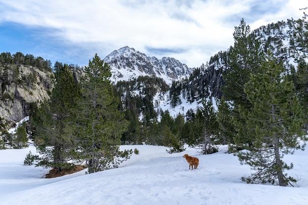 Blick auf den nationalpark von aiguestortes und den see von sant maurici mit einem hund.