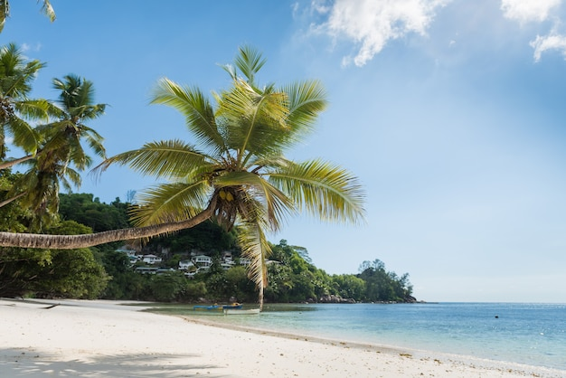 Blick auf den strand der seychellen mit kokospalme