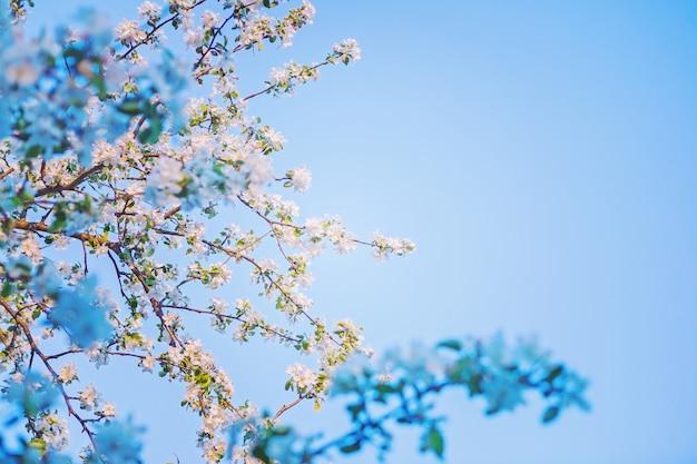Blick auf die blüte des apfelbaums