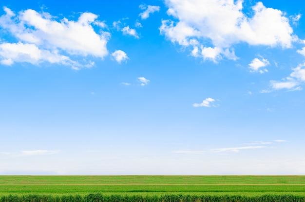 Blick auf die wiese und den himmel an bewölkten tagen