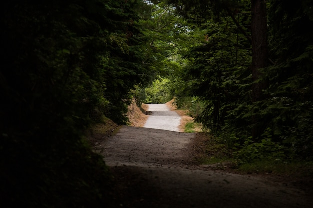 Blick auf eine unebene straße, umgeben von hohen bäumen - konzept: geheimnisvoll