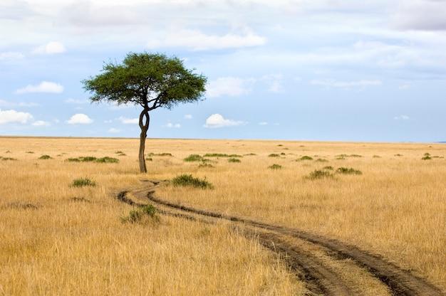 Blick auf einen baum mitten in einer ebene im naturschutzgebiet masai mara.
