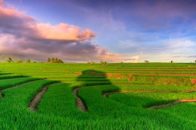 Blick auf grüne reisfelder mit schönem himmel in asien