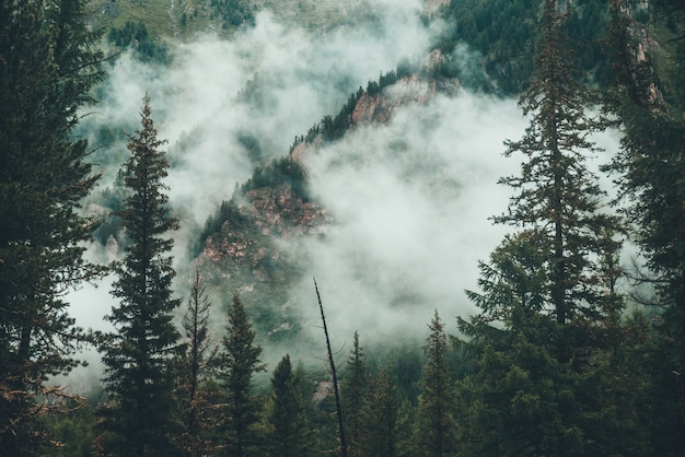 Blick auf immergrüne bäume im dichten nebel