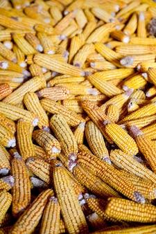 Blick auf mais. foto für den hintergrund.
