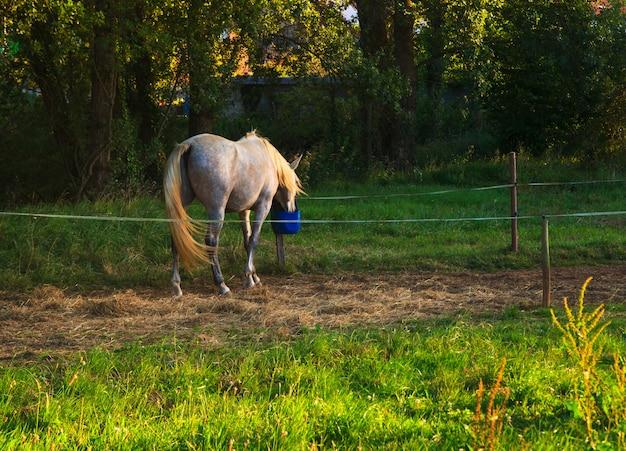 Blick auf pferd