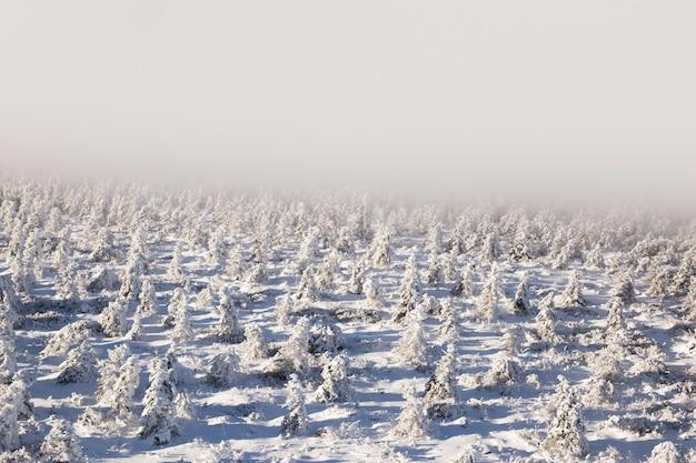Blick auf schneebedeckte bäume durch schneefall.