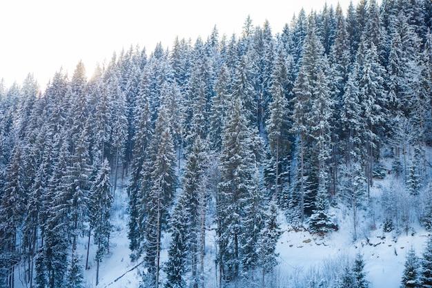 Blick auf schöne schneebedeckte berge und wald