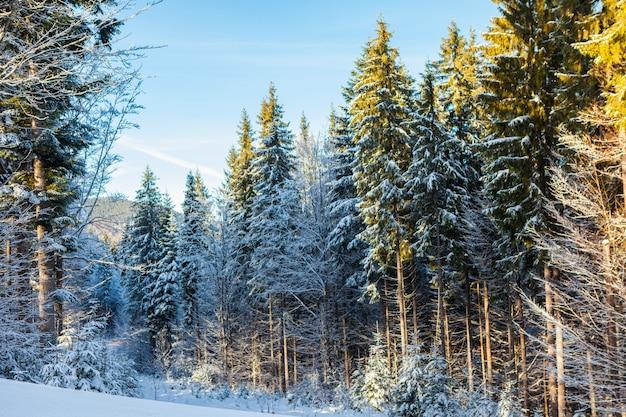 Blick auf schöne schneebedeckte berge, wälder