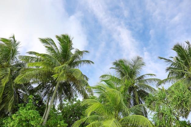 Blick auf schöne tropische palmen gegen blauen himmel