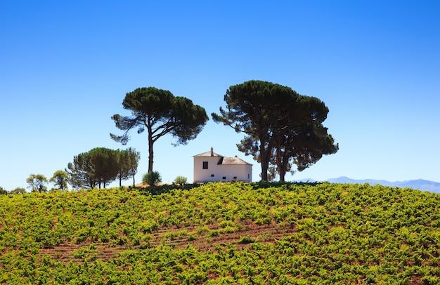Blick auf weinberge in der spanischen landschaft