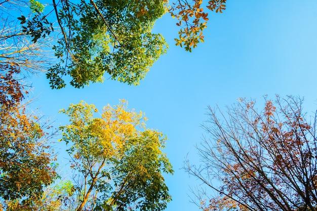 Blick nach oben ast tre blätter eines baumes
