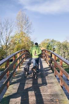 Blick von hinten auf einen mann, der eine brücke mit einem holzpfahl auf dem rücken überquert, gefolgt von seinen hunden