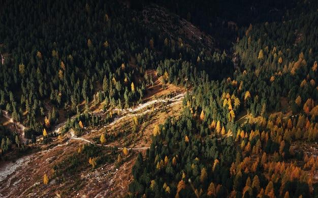 Blick von oben auf den berg mit bäumen, die teilweise von der sonne beleuchtet werden.