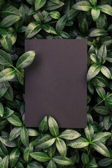 Blick von oben auf den immergrün-blattrahmen und den kopierraum auf isolierten schwarzen hintergrundgrünblättern mit papier...