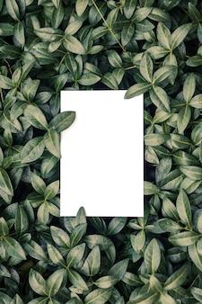 Blick von oben auf den immergrün-blattrahmen und den kopierraum auf isolierten weißen hintergrundgrünblättern mit papier...